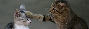 Viral Video Image Of Cats Playing